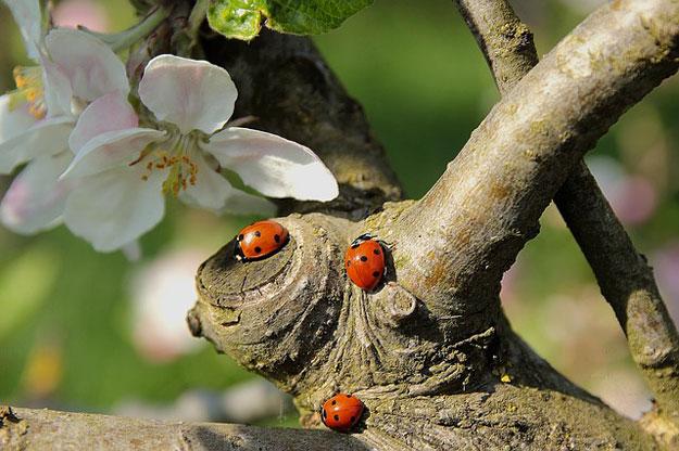 Pucerons fabriquez votre insecticide naturel - Produit naturel contre les pucerons ...