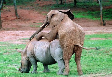 image drole elephant