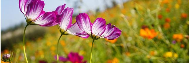 Jardiner de saison : que faire au jardin ce mois ci ?
