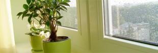 Les soins à apporter aux plantes d'intérieur en mai