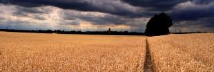 La PAC 2014 sera-t-elle plus écologique ?