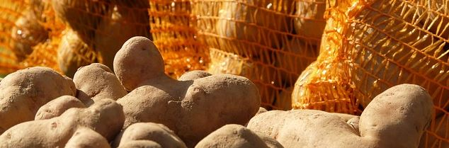 pomme-terre-sacs