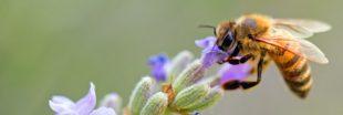 Abeilles et pollinisateurs : mieux les connaitre pour mieux les protéger