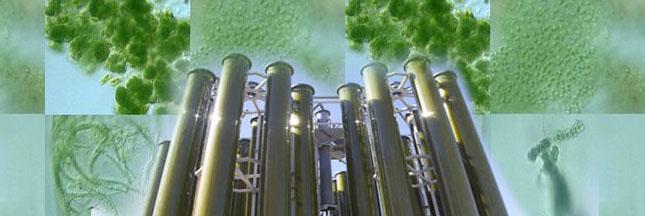 Acta Alga révolutionne le biocarburant de micro-algues