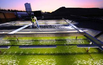 biocarburants-algues