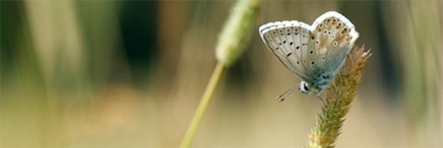 Journée mondiale de la biodiversité : en mai, fêtez la nature !