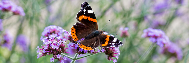 Journée internationale de la biodiversité : en mai, fêtez la nature !