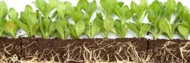 Pollution – les plantes qui purifient les sols pollués