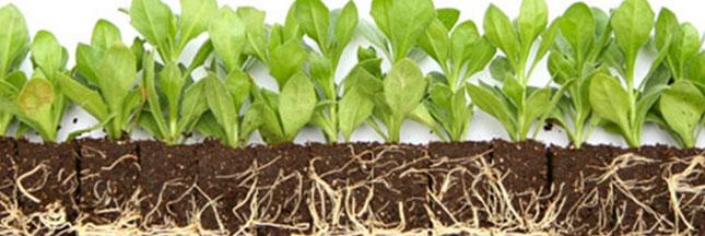 Pollution - PHYTOCYAN et les plantes qui purifient les sols pollués