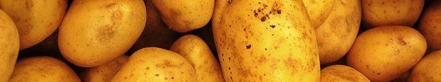 pommes-de-terre féculents
