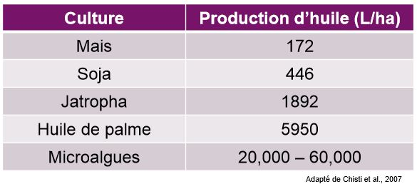 production-huile-algues