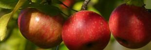 Supprimez l'acné en quelques jours avec des pommes