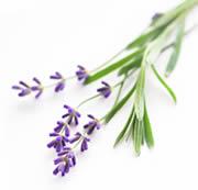 aromatherapie lavande