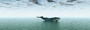 Atlantique sud : non au sanctuaire baleinier et non au Japon