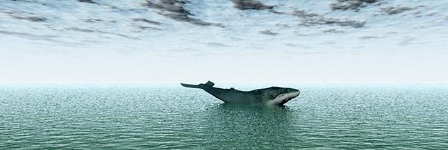 Chasse à la baleine: le Japon face à la justice