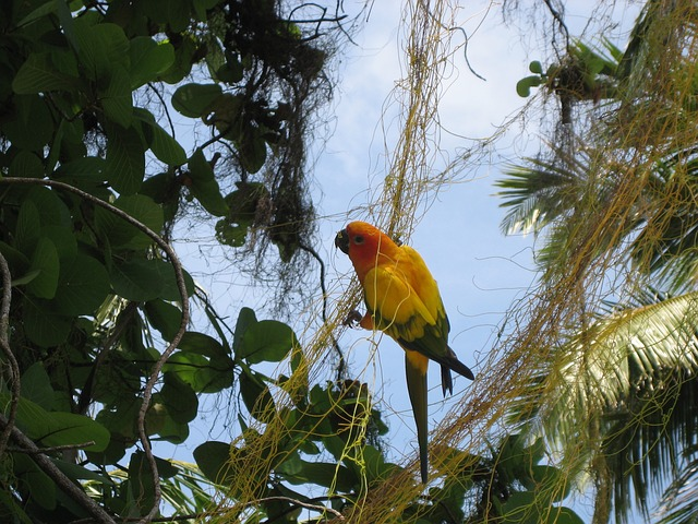maldives-perroquet