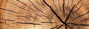 Une batterie écologique... à partir de bois