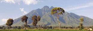 Total va-t-il épargner le parc des Virunga ?