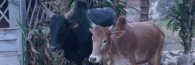 Plan d'épargne animal : investissez dans un animal