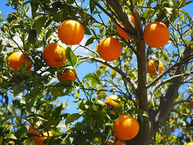 bronzage-astuces-oranges
