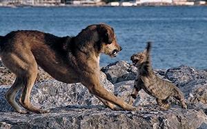 garder les chiens et les chats service chenil