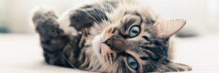 Faire garder ses animaux domestiques en famille d'accueil
