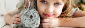 Faire garder ses animaux domestiques: pension ou chenil pendant les vacances