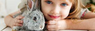 Faire garder ses animaux domestiques : pension ou chenil pendant les vacances