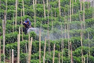fraises-pesticides2