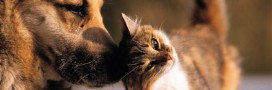 garde-chats-chiens-animaux-compagnie-vacances
