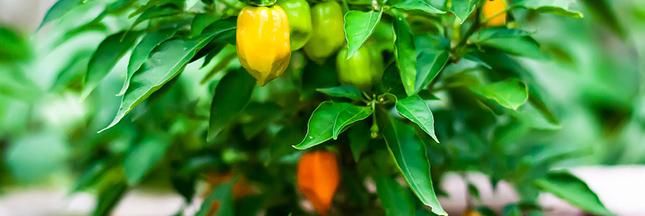 Recevoir des graines D'Aucy pour créer votre jardin potager de balcon