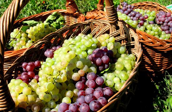 raisins-sante-bienfaits