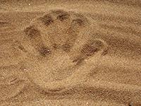 sable-main-grains-small