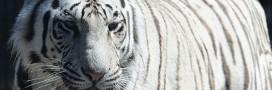 Pétitions pour la protection des animaux: ça foisonne sur le net!