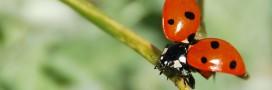 Lutte biologique: les petites bêtes et insectes utiles à votre jardin