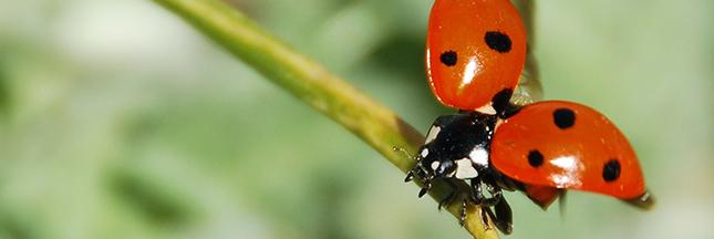 7 conseils pour un jardin bio naturel au printemps. Black Bedroom Furniture Sets. Home Design Ideas