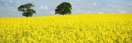 «Bons» et «mauvais» biocarburants: négociations décisives pour leur avenir