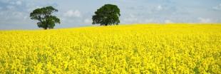 «Bons» et «mauvais» biocarburants : négociations décisives pour leur avenir