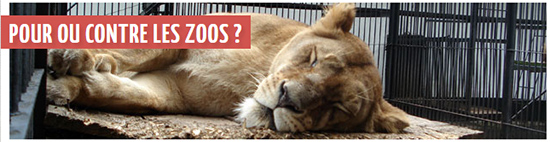 debat-zoos-animaux-animal-zoo