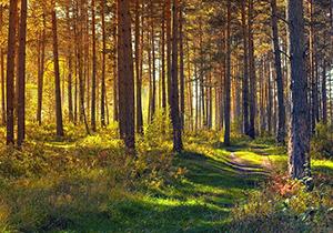 Plantations d'arbres en France