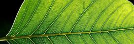 La photosynthèse des plantes depuis l'espace, un spectacle envoûtant