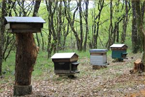 les-4-ruches