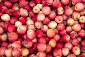 tas-pommes-rechauffement-climatique