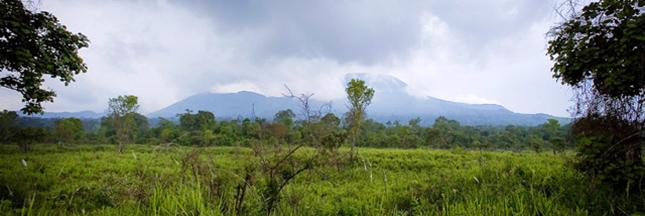 Extraction pétrolière dans le parc des Virunga : la lutte n'est pas finie