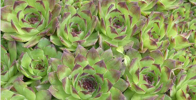 La v g talisation de toiture en ville tendance ph m re ou nouvelle voie po - Plante toiture vegetalisee ...