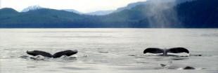 Un sanctuaire pour les baleines et dauphins en Uruguay
