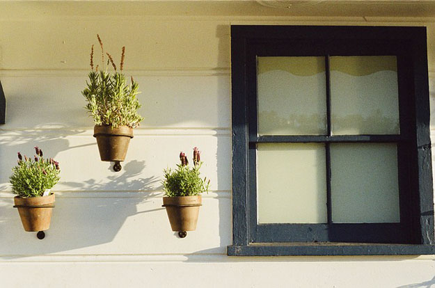 plantes-maison-septembre