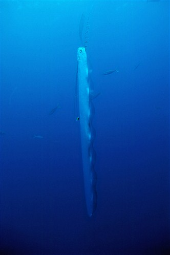regalec-nage-verticale