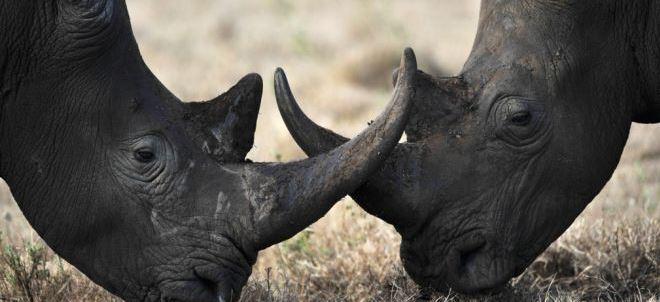 rhinoceros-noir disparition