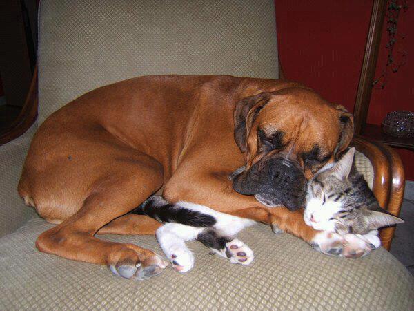 chien-chat-sieste
